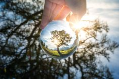 The three of life captured within a Lensball. Amazing artwork of our friend Nejc Heberle. #lensball #crystalball #photography BUY HERE: https://lensball.com/