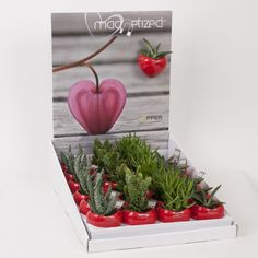 Cute Christmas Succulents Gift Set - Magnetic planters - Ideal Stocking Filler Present - Delivery in First Week of December or Before - Perfect for use on fridges, whiteboards and other magnetic surfaces - Instant colour splash in a modern style - Gift wrap can be added for extra special touch - Love heart planters, Black and White Planters and Modern colours available. (2, Multi): Amazon.co.uk: Kitchen & Home
