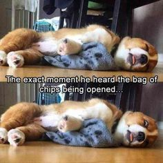 Funny Animals Pictures #DogFunny