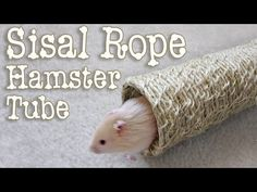 Natural Sisal Rope Hamster Tube DIY by Hammy Time - YouTube