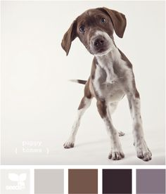 Puppy Tones - like the dash of dusky purple