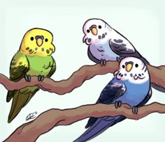 cookietiel:  A bunch of budgies to brighten up your day!