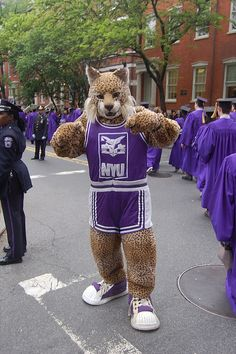 My first choice college is NYU. This is an NYU bobcat. Here, I want to major in pre-med.---- okay so I totally didn't write that but that pretty much sums me up.