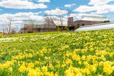 This place won't be fully completed until but it's already one of the most stunning places to explore in Massachusetts. Boston Area, Tulip Fields, Summer Sun, Daffodils, Botanical Gardens, Massachusetts, Beautiful Gardens, New England, Oasis