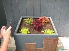 Egynyári virágok ültetése növénytartóba Make It Yourself, Facebook, Plants, Plant, Planets