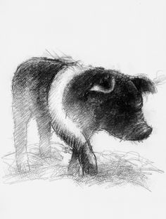Little pig, Artist Sean Briggs producing a sketch a day, prints available at https://www.etsy.com/uk/shop/SketchyLife #art #drawing #http://etsy.me/1rARc0J #piglet