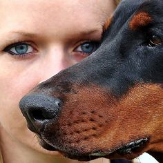How to be pack leader of your dog. Find the answers to the 2 questions dog owners ask the most! Learn how to be pack leader of your dog by reading this article! Doberman Pinscher, Doberman Dogs, Pet Dogs, Dobermans, Rottweiler, Training Tips, Dog Training, Doberman Training, How To Introduce Dogs