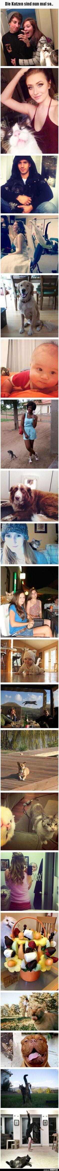20 Funny Cat Photobombs To Make You Smile - jajaja gatos. Cute Funny Animals, Funny Cute, Cute Cats, Hilarious, Funny Jokes, Super Funny, Funny Minion, Funny Cat Photos, Funny Animal Pictures
