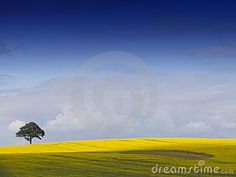 Rural English Landscape.   © Bond138 | Dreamstime.com  http://www.dreamstime.com/rural-english-landscape-image2671361#