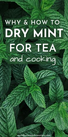 How to dry mint for tea and cooking! Drying your own mint leaves in the oven, or airdrying is easy and will provide you with high-quality dried mint leaves! Mint Recipes, Tea Recipes, Detox Recipes, Recipies, Drying Mint Leaves, Uses For Mint Leaves, Mint Leaves Recipe, Benefits Of Mint Leaves, Fresh Mint Leaves