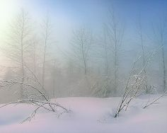 A Surreal Winter Morning, via Flickr.  Sunrise with mist, British Columbia