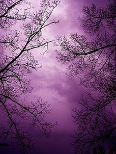 Purple night sky.