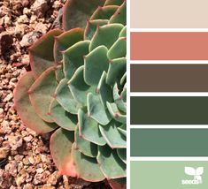 Succulent Hues - http://design-seeds.com/index.php/home/entry/succulent-hues19