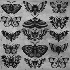 Middle fourth row. middle fourth row traditional butterfly tattoo, traditional tattoo sketches Bild Tattoos, Neue Tattoos, Body Art Tattoos, Sleeve Tattoos, Tatoos, Sternum Tattoos, Tattoo Arm, Chest Tattoo, Trendy Tattoos