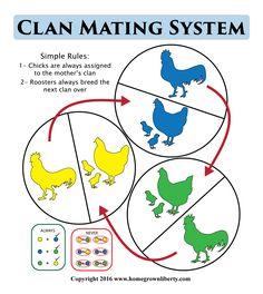 clan-mating-system-illustration-large