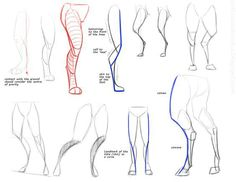 Anthro leg reference; this is how mine are proportioned