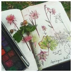 Coral Aquilegia for today's outdoor sketch. The garden is a hive of activity at…