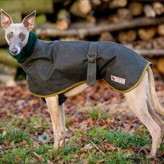Whippet Collarless Coat Green
