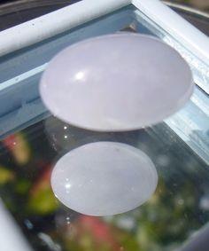 Jadeite (A) Jade Himalayan Violet Cabochon-approx.15.94 carats 18x14x8mm-Natural…