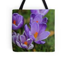 spring crocuses, floral, tote bag, in stock
