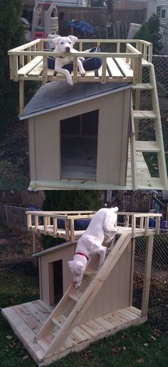 Interesting dog house design.  One of our dogs loves to be up high, surveying her domain.  I'll bet she'd love this.  No link, because the link that originally came with the picture was bad. http://www.relaxingdoggy.com/product-category/dog-houses-crates-kennels/dog-houses/