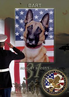 In Memory Of Bart a True American Hero War Dog. Thank you Bart, for sacrificing your life in service to our country. I'd like to introduce Bart. He's the heroic working dog killed in action with 22 Navy SEALs Military Working Dogs, Military Dogs, Police Dogs, Seal Team 6, Animal Heros, War Dogs, Service Dogs, Mans Best Friend, I Love Dogs
