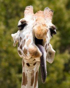 Vooooll peinlich… diese 10 betrunkenen Tiere haben es eindeutig zu heftig krachen lassen!