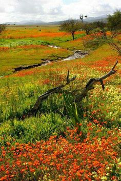 Namaqualand is famous for its impressive fields of Namaqua daisies and other wildflowers. This beautiful region of South Africa was made famous by nature photographer, Freeman Patterson. Places To Travel, Places To See, Beautiful World, Beautiful Places, Beautiful Flowers, Photos Voyages, Africa Travel, Beautiful Landscapes, Out Of Africa