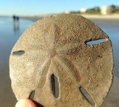10 Fun Things to Do on Hilton Head Island with Kids: Hit the beach via @Family_Travel. @PalmettoDunes