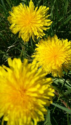 This is weed..but its yellow and its beautiful