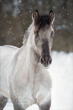 Like If Someone Turned A Wizard Into A Horse — russianhorses: Yakutian Horse stallion Oskar . animals silly animals animal mashups animal printables majestic animals animals and pets funny hilarious animal Most Beautiful Horses, All The Pretty Horses, Animals Beautiful, Majestic Animals, Animals And Pets, Cute Animals, Horse Pictures, Horse Photography, Horse Love