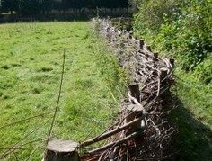 DIY Pine Wattle Fence | The Owner-Builder Network Wattle Fence, Wattle And Daub, Easy Diy Projects, Art Projects, Fence Design, Garden Structures, Trees And Shrubs, Garden Gates, Pine