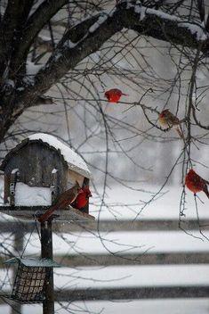 Winter |