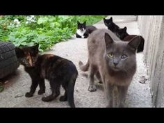Kittens Meowing, Kittens Playing, Baby Kittens, Little Kittens, Kittens Cutest, Cats And Kittens, Baby Animal Videos, Baby Videos, Funny Horse Videos
