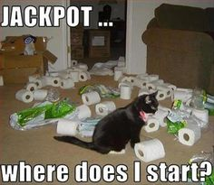 Funny Picture Dump Of The Day – 53 Pics...cat boredom jackpot with toilet paper