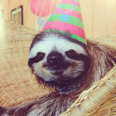 Ain't NO party like a Sloth party