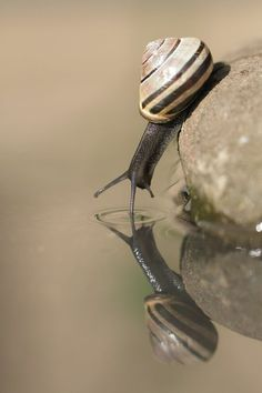 Snail by Steve Adams - National Geographic Your Shot