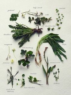 simply-divine-creation:  Wild herb gathering» Fork and Flower