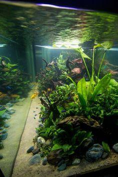 Pet Supplies Aquarium Aquael Shrimpset 19 Litres Black To Reduce Body Weight And Prolong Life Fish & Aquariums