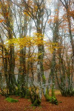 Golden-October by Philippe Sainte-Laudy PHOTOS DE FORÊTS EN AUTOMNE https://500px.com/naturephotographie