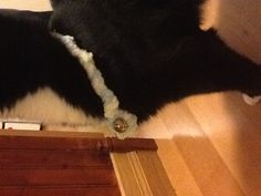 I knitted my cat Indigo a collar and used a leftover bell and just attached it onto the collar.