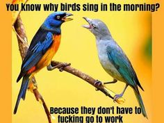 Know why birds sing in the morning? Because they don't have to fucking go to work
