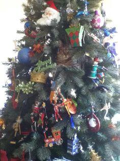 La navidad, ademas de amor, paz, felicidad y regalos, también deja momentos de lo mas tiernos y divertidos con las mascotas de la casa. Es esa época...