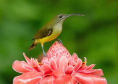 Spiderhunter on Ginger Flower by Harprit Singh on 500px
