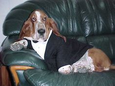 Love it! My boy poses like this & I call him Fabio :) He's never sported a tux though; quite dapper.