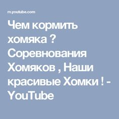 Чем кормить хомяка ? Соревнования Хомяков , Наши красивые Хомки ! - YouTube