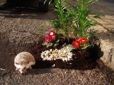 London Potholes Become Mini-Gardens