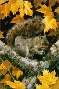 Carl Brenders - Golden Season - Gray Squirrel.  Mixed media painting of watercolor and gouache
