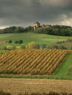 Vineyards Near Lons Le Saunier, Jura, Rhone Alpes, France. Photo: Michael Busselle