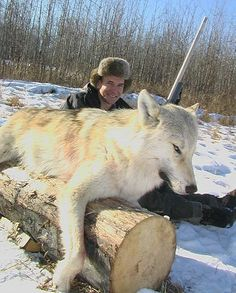 Alpine Outfitters   wolf hunting  OUTDOORSMAN.com